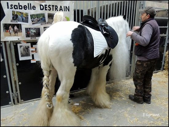 Le salon du cheval de Mons