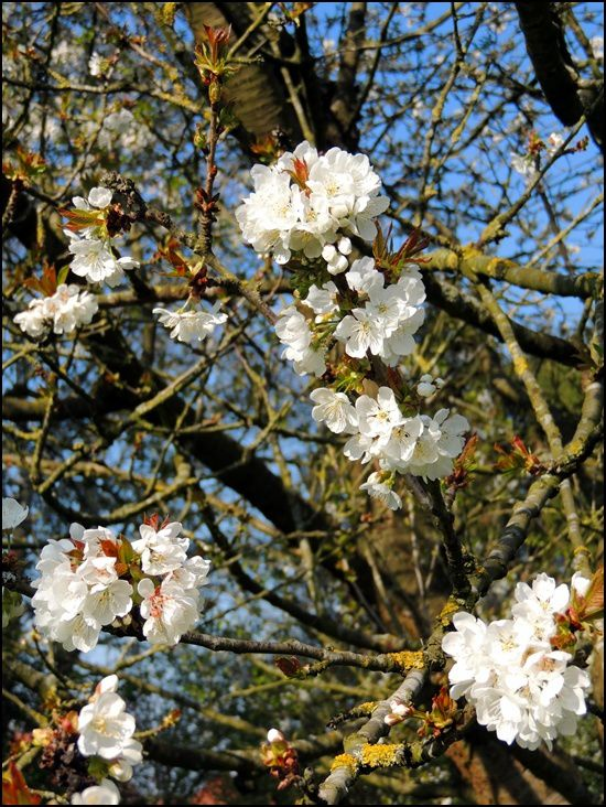 Les fleurs d'Avril