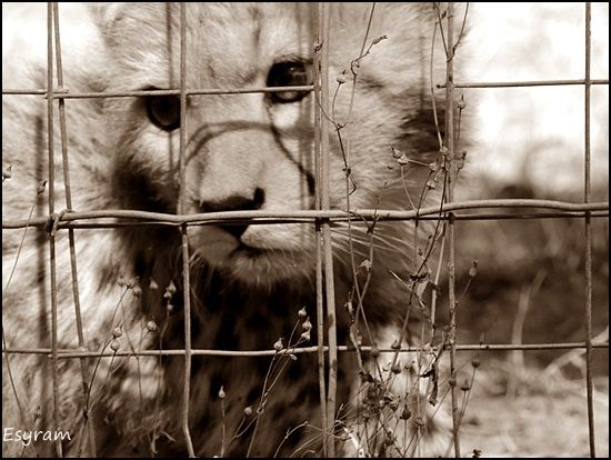 """Photo n°5  """"Prison"""""""