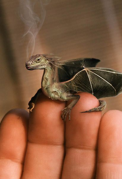 j'avais adopté un dragon miniature !