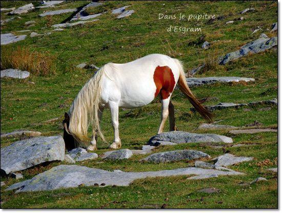 Le Pays Basque (4) La Rhune