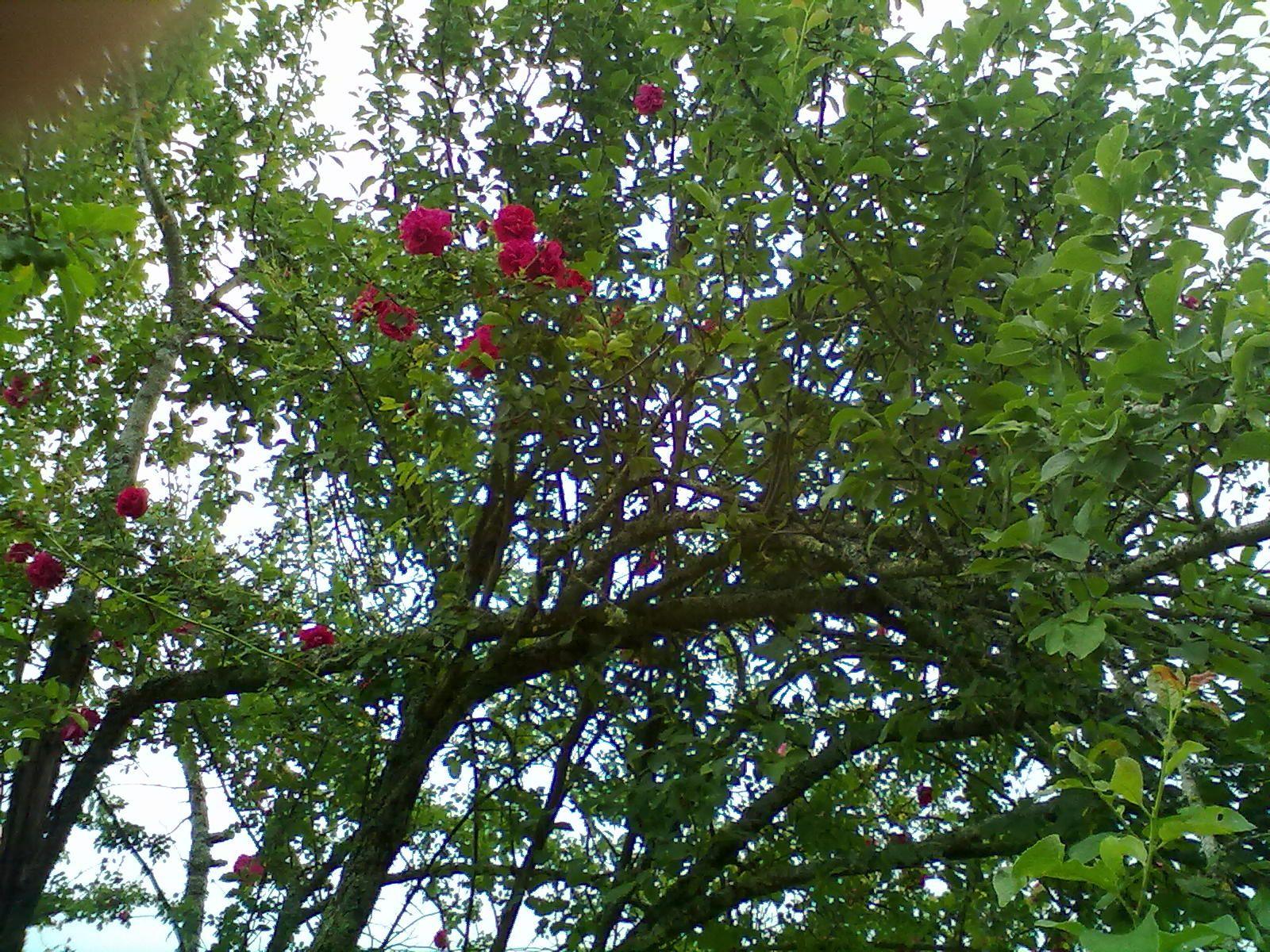 le jardin à l'anglaise de Kate et Richard Mailfert , réserve de nombreuses surprises au visiteur, telle cette sculpture du Zimbabwe perché sur  la fourche d'un arbre.
