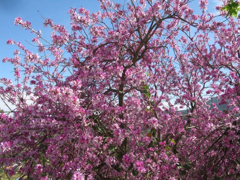 Album de fleurs Ibériques