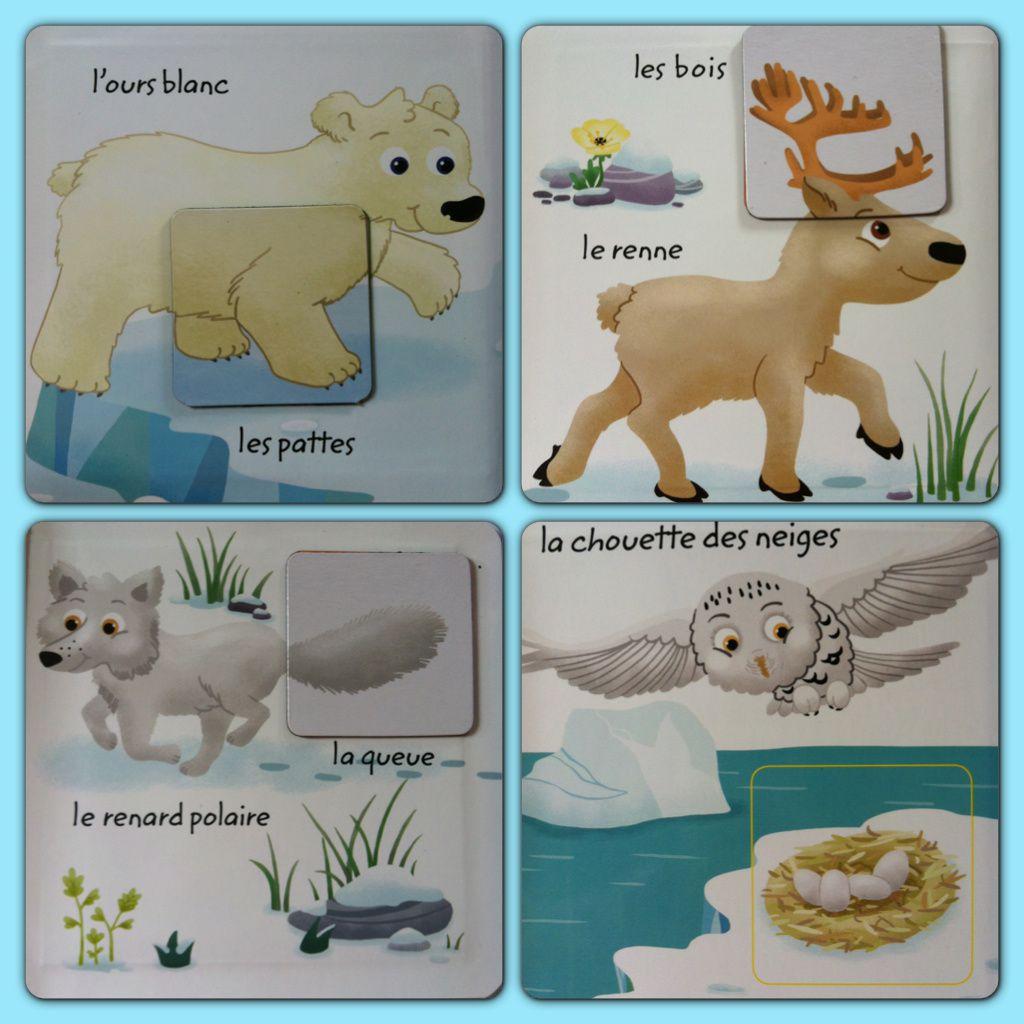 Les animaux du froid (mini-imagiers magnets)