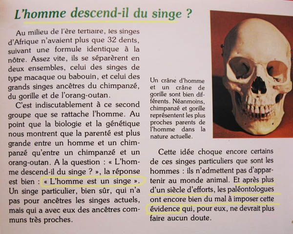 blague l'homme descend du singe