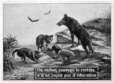 Animaux_évolution_forêt_sauvage