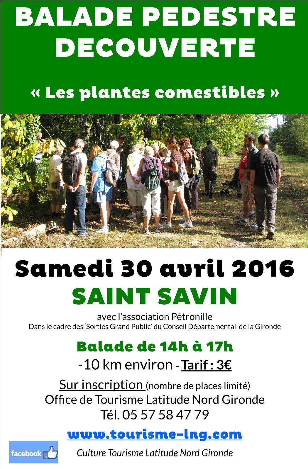 Balade pour découvrir les plantes comestibles à ST SAVIN
