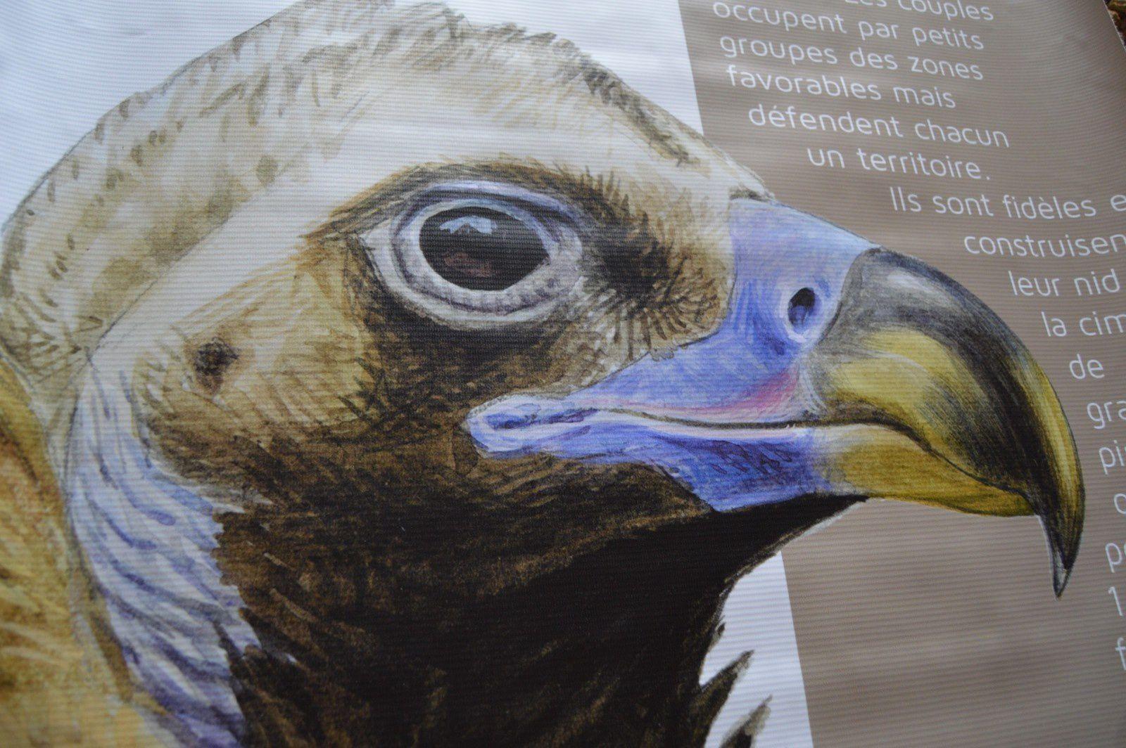 La maison cévenole propose une exposition sur les vautours, au musée rue du pont, tous les jours de 9 heures à midi et de de 15 heures à 19 heures.