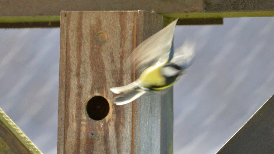 C'est l'printemps, les p'tits oiseaux font cuicui.