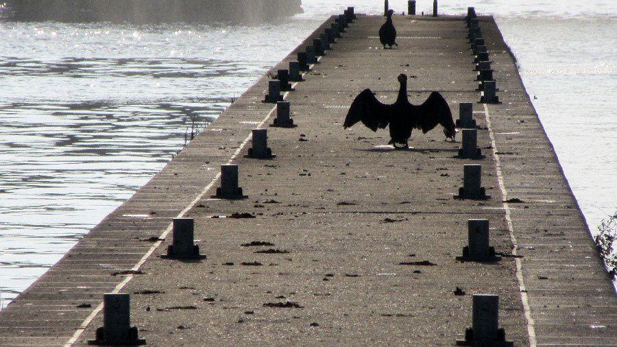 Promenade au Parc de la Boverie