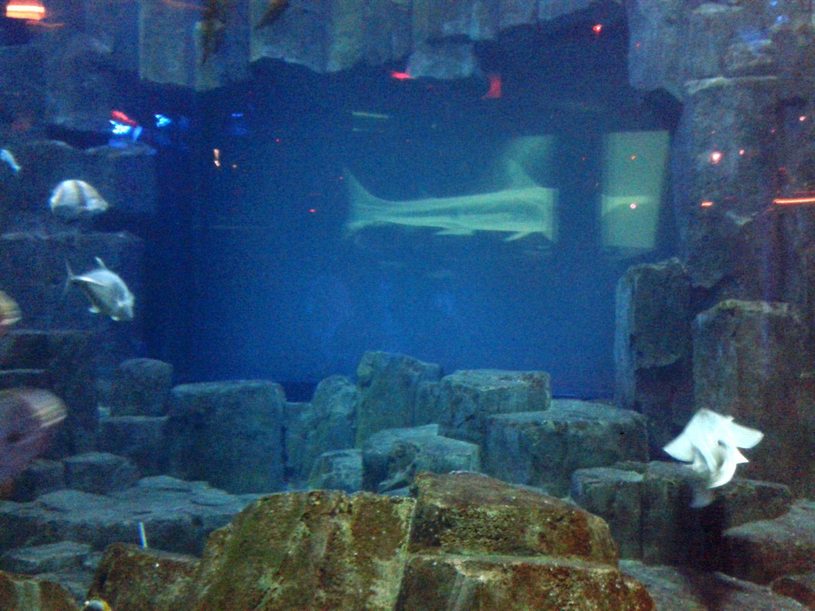 Par-delà les profondeurs : Ann Grim incite à penser notre société en installant ses oeuvres dans le parcours de l'aquarium.