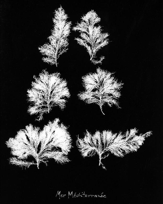 Photographies de Marc Bellini, les deux premières oeuvres, Anadyomène