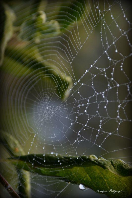 Toiles d'araignées !
