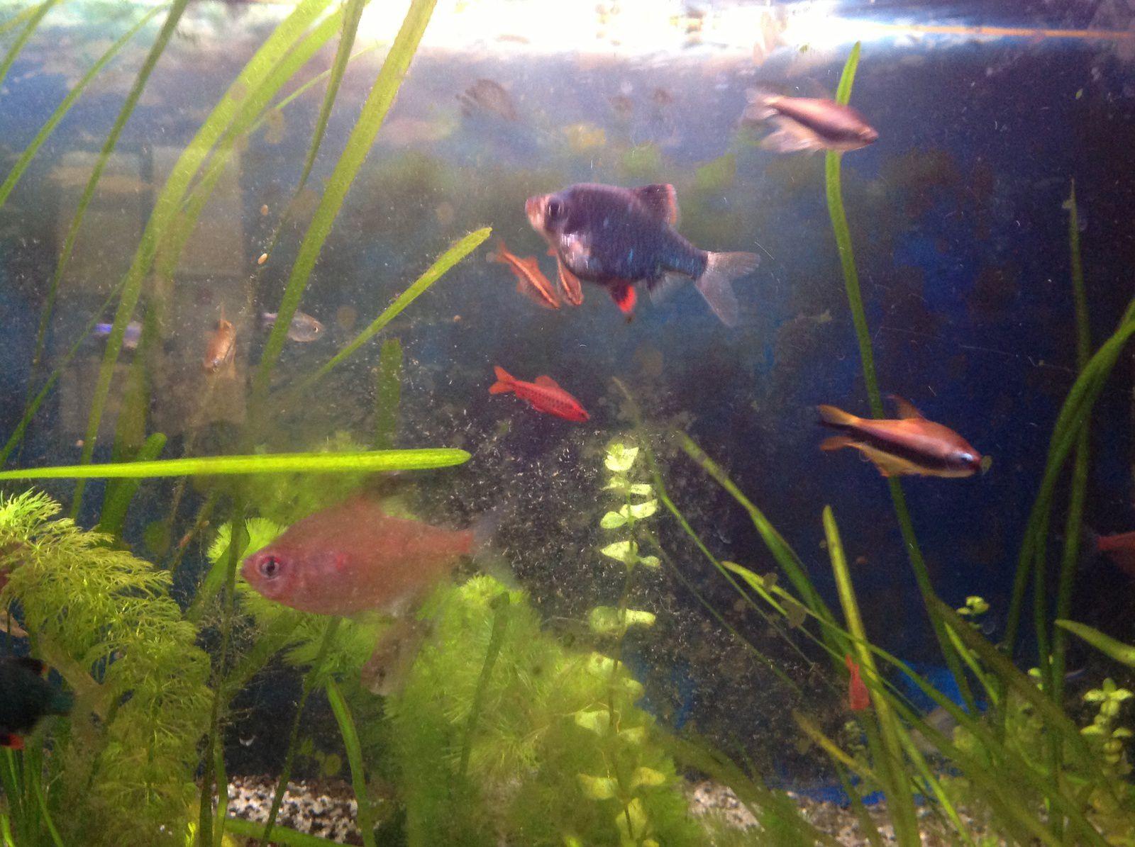 Le.aquarium chez nounou