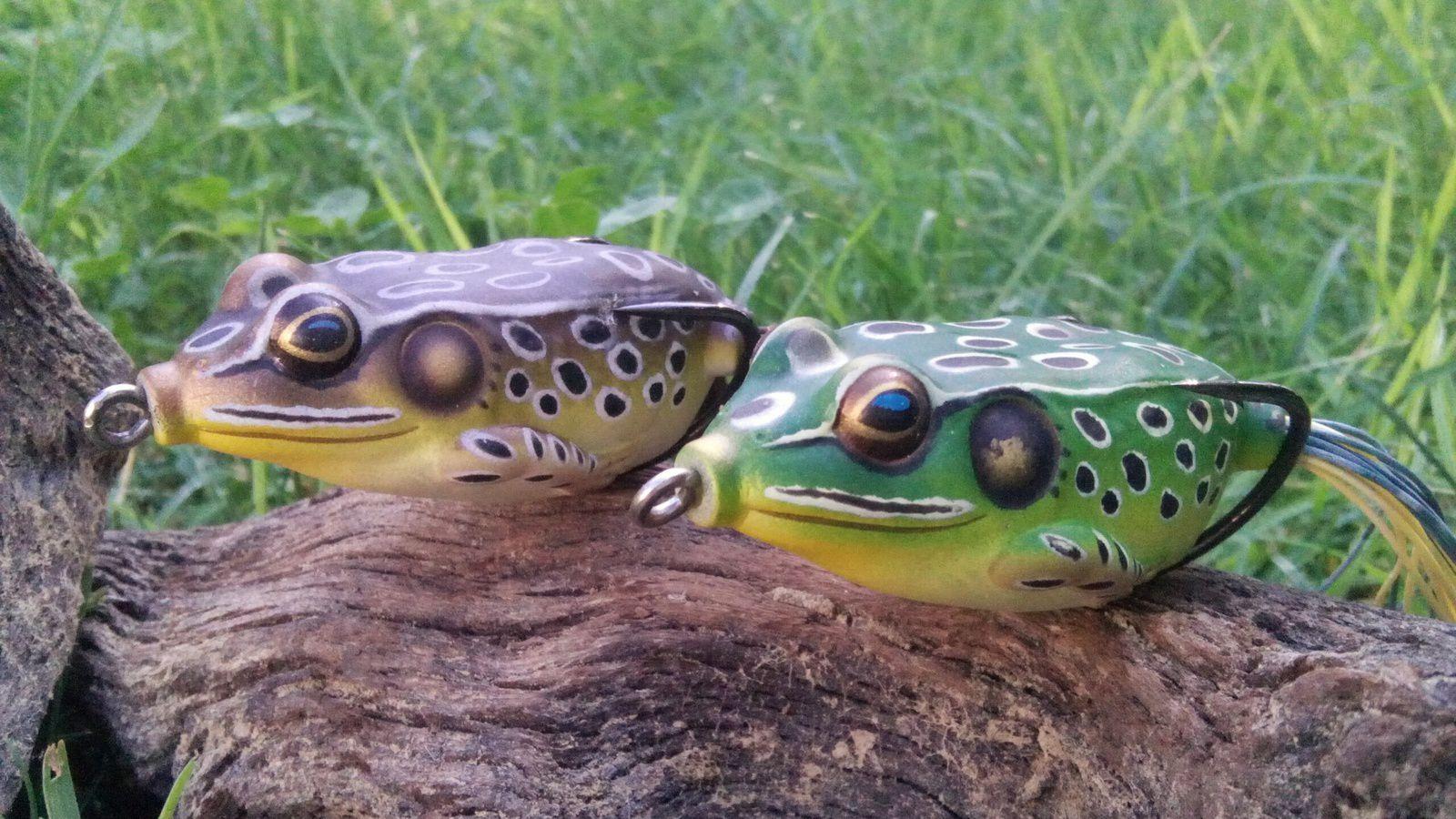 Les indispensables grenouilles, les frog hollow body.