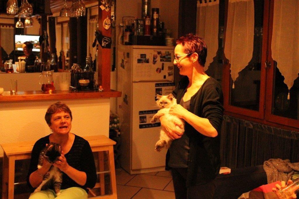 dimanche 2 novembre 2013. Après un voyage à Montluçon, voici les nouveaux protégés de Carole, 2 chatons qui ont fait une belle attraction pour la soirée.