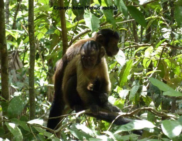Le zoo de guyane marie odile et philippe for Zoo exterieur
