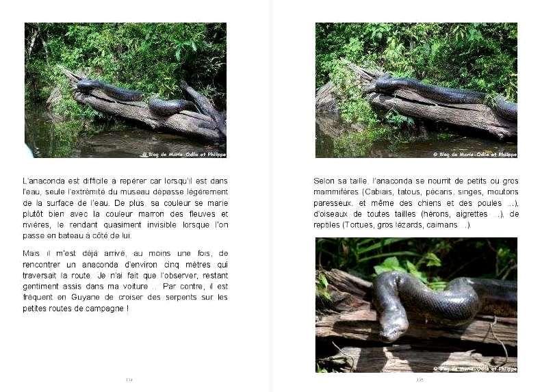 """Ci-dessus un extait de l'article """"Rencontre avec un gros anaconda sur le fleuve Kourou"""" dans le chapitre Faune."""