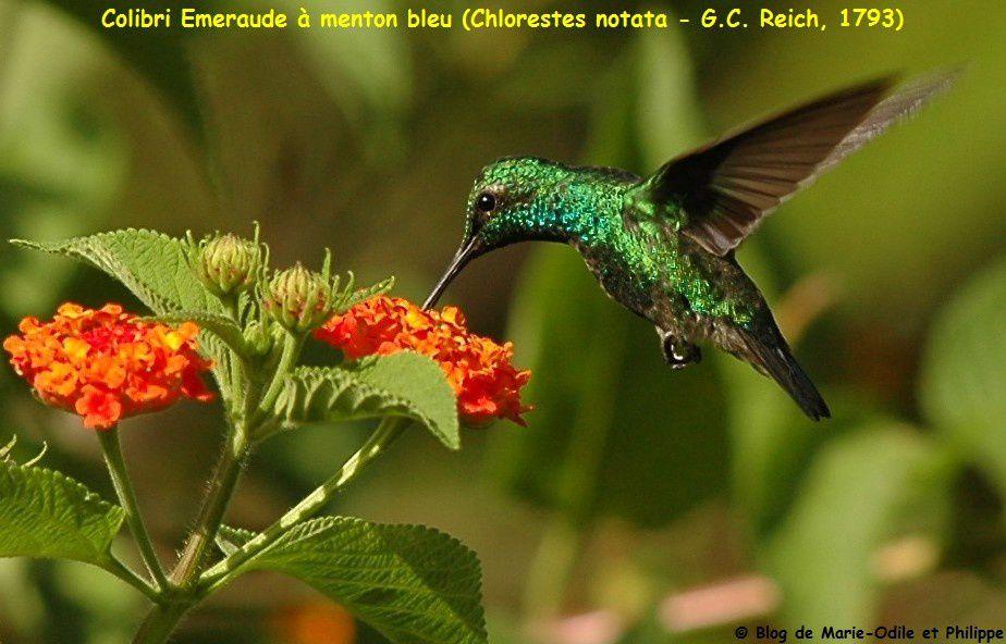 Photographies de bestioles de la Guyane prises par Philippe, Marie-Odile ou d'autres ...