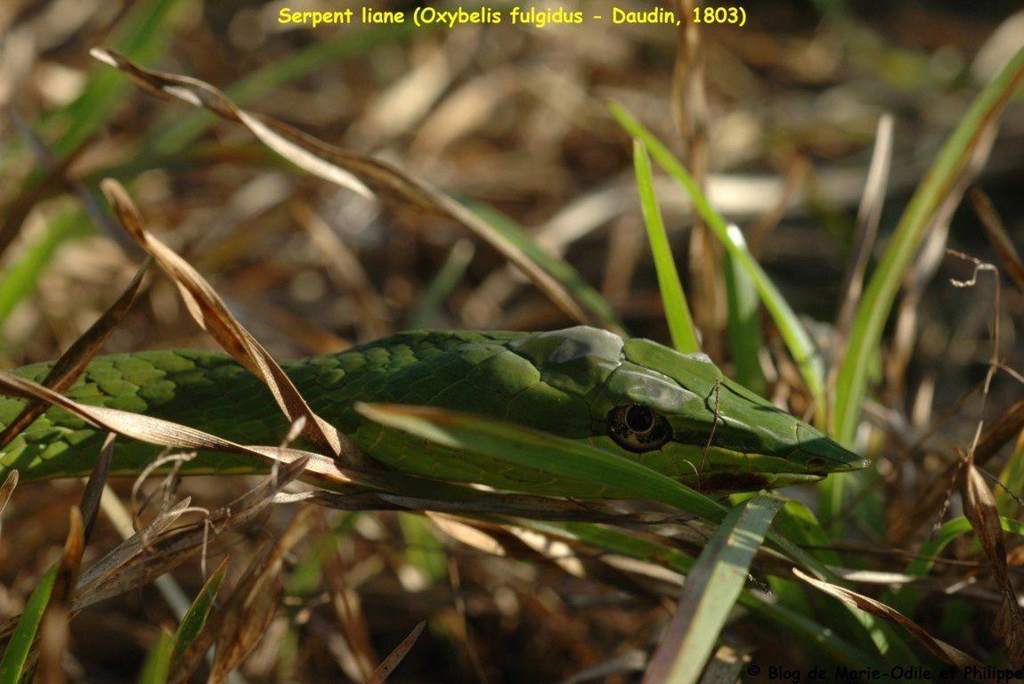 """Quelques photos de """"bestioles"""" de la Guyane prises par Philippe, Marie-Odile ou d'autres..."""