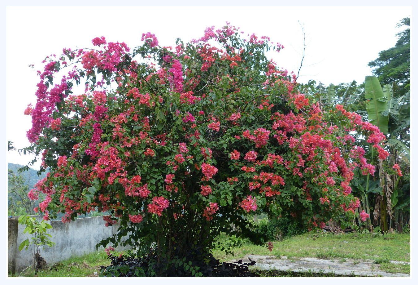 l' «île des fleurs » se dévoile à nous