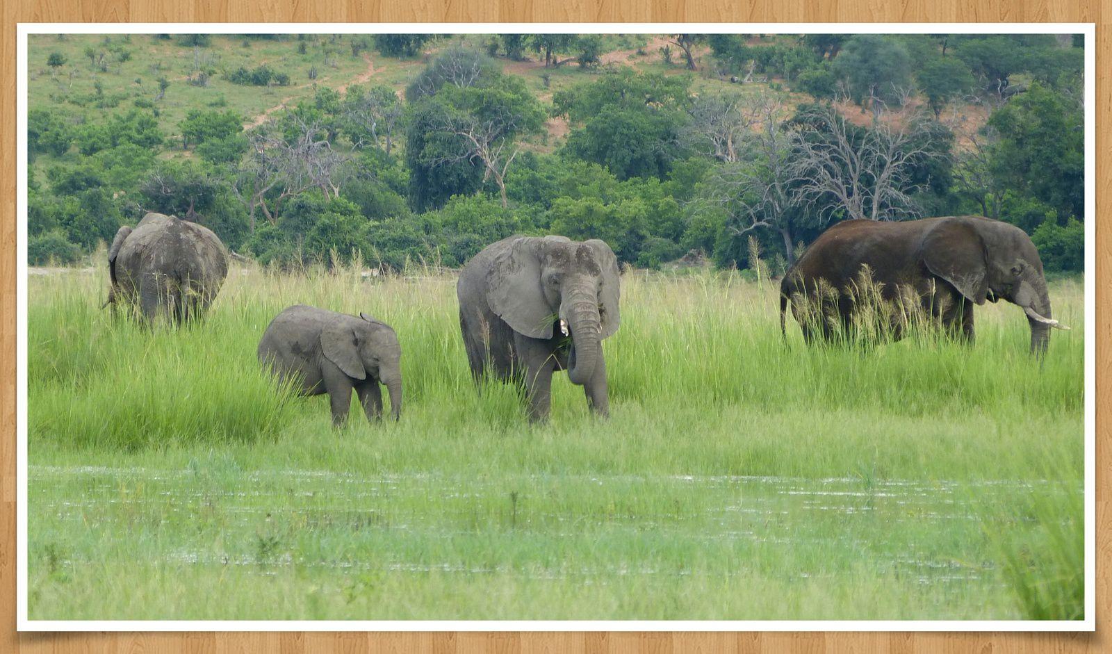 Au Botswana: VS Eléphant/Toyota  (Version spéciale)