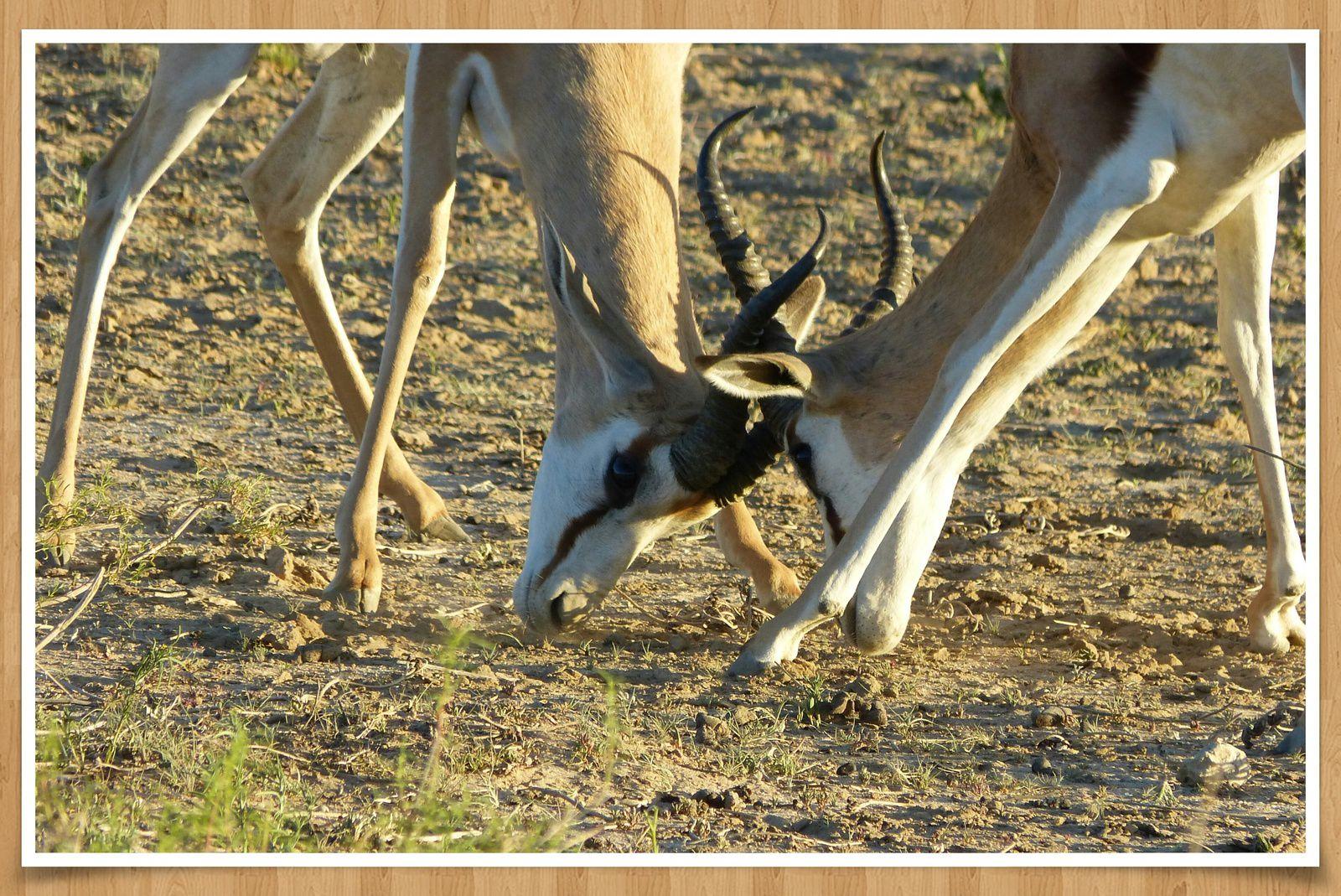 Février en Namibie... en campsite de luxe