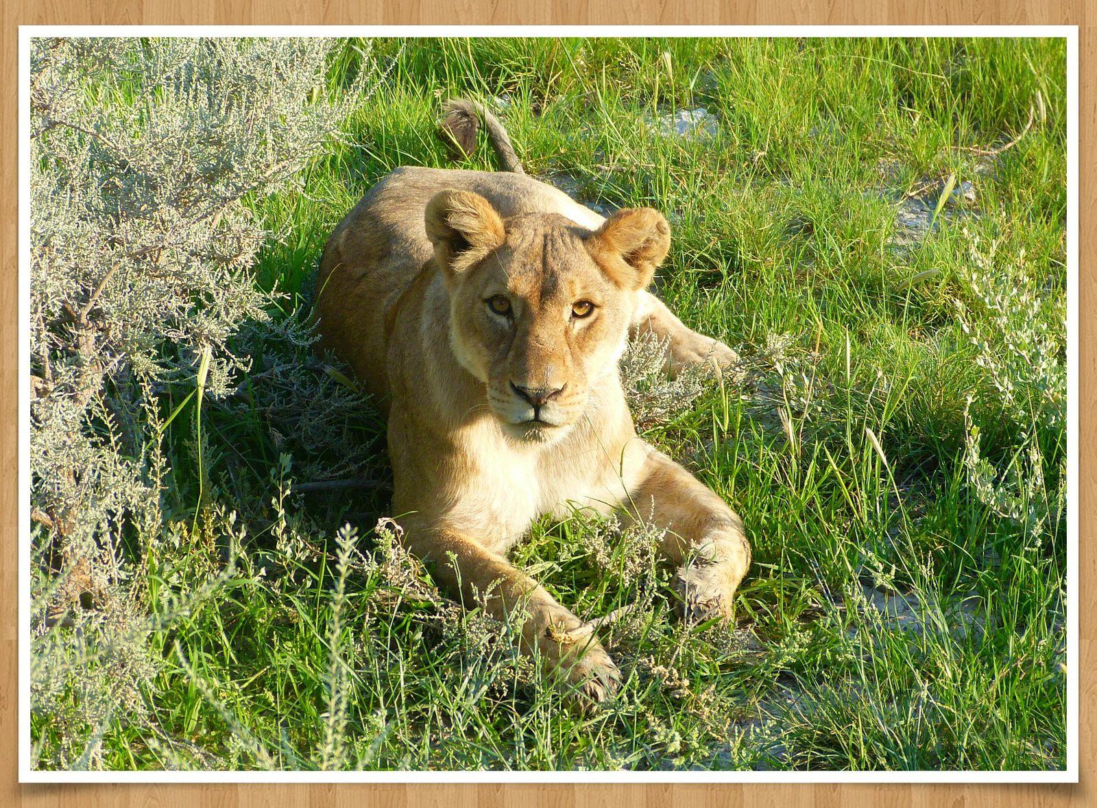 Dans les réserves d'Etosha et la bande de Caprivi