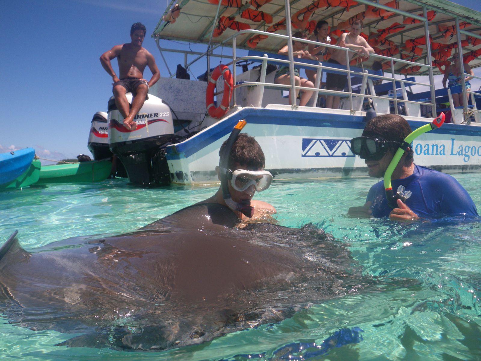 Rencontre avec les raies et les requins: senation spéciale : les raies sont douces et viennent se coller à nous.