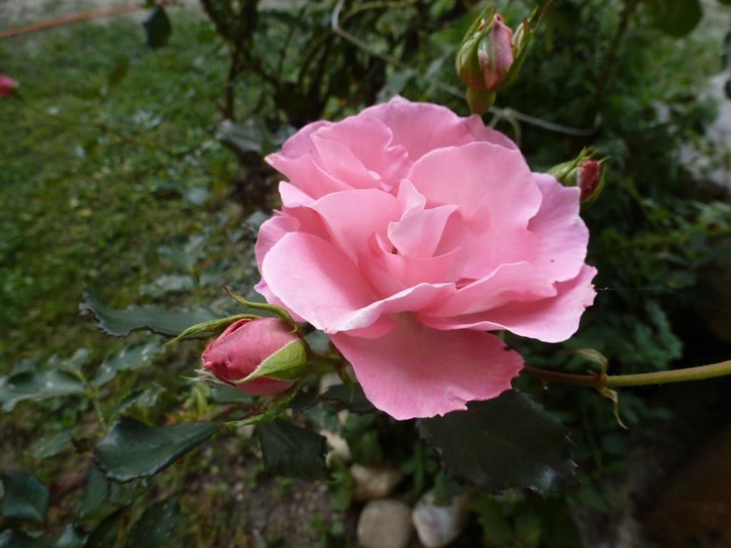 Un jour pour les fleurs #3