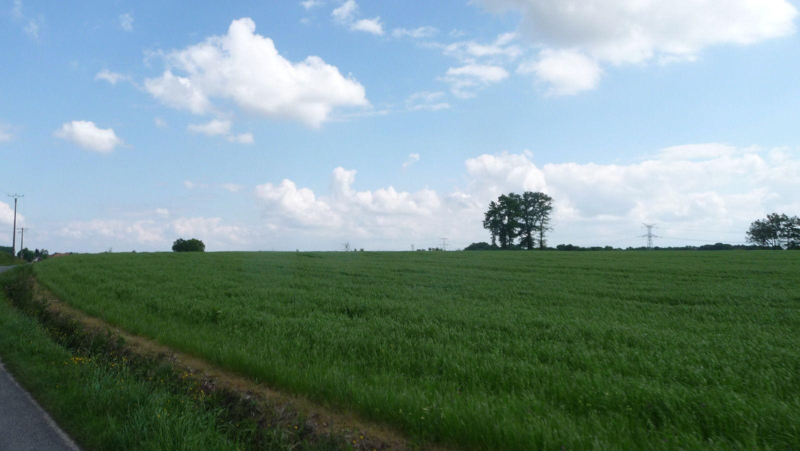 C'est le printemps sur le nord-Béarn.