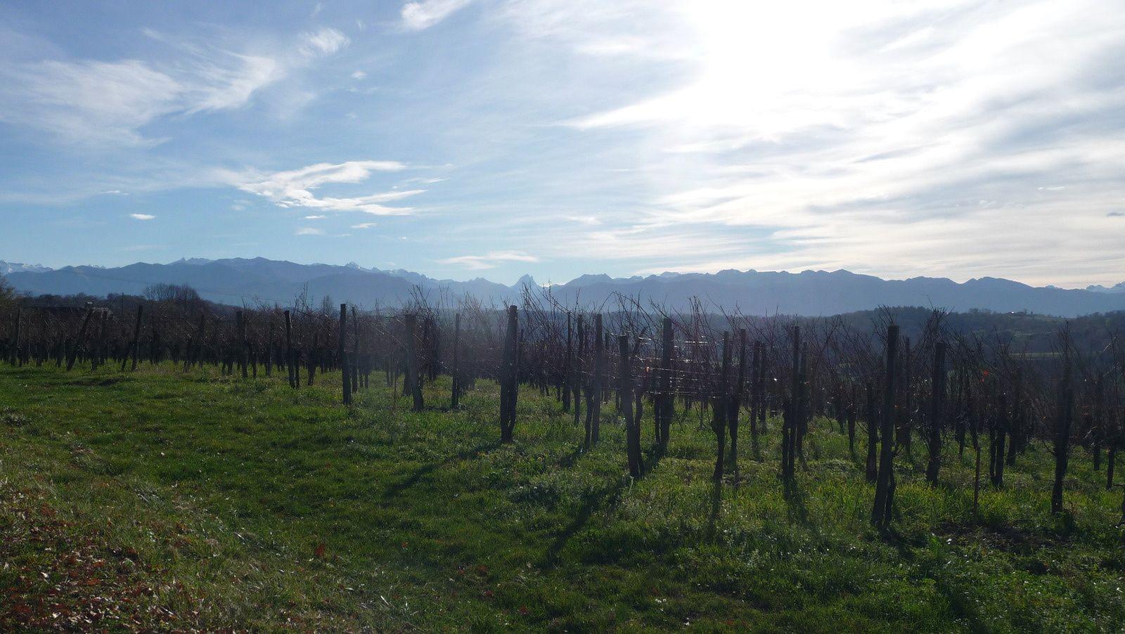Les Pyrénées et le vignoble du Jurançon à La Chapelle de Rousse.