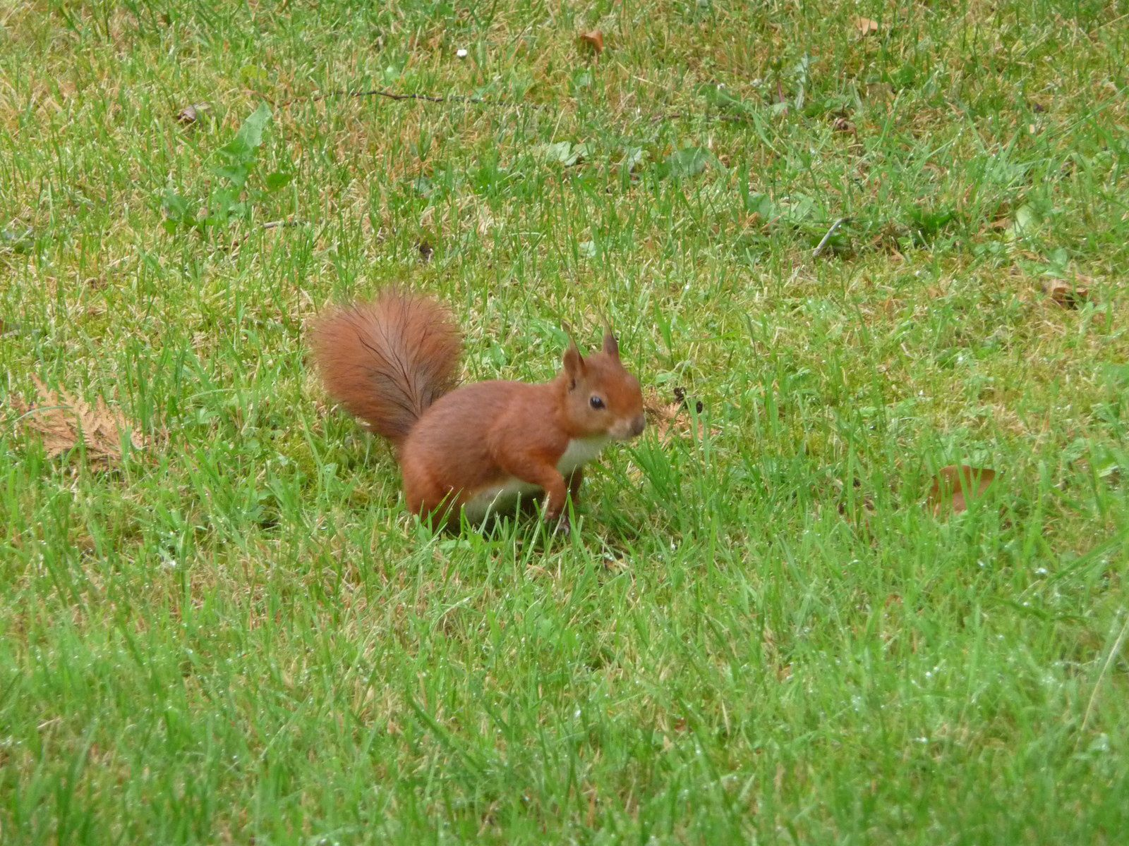 Le matin, en déjeunant, nous avions eu la visite d'un écureuil.