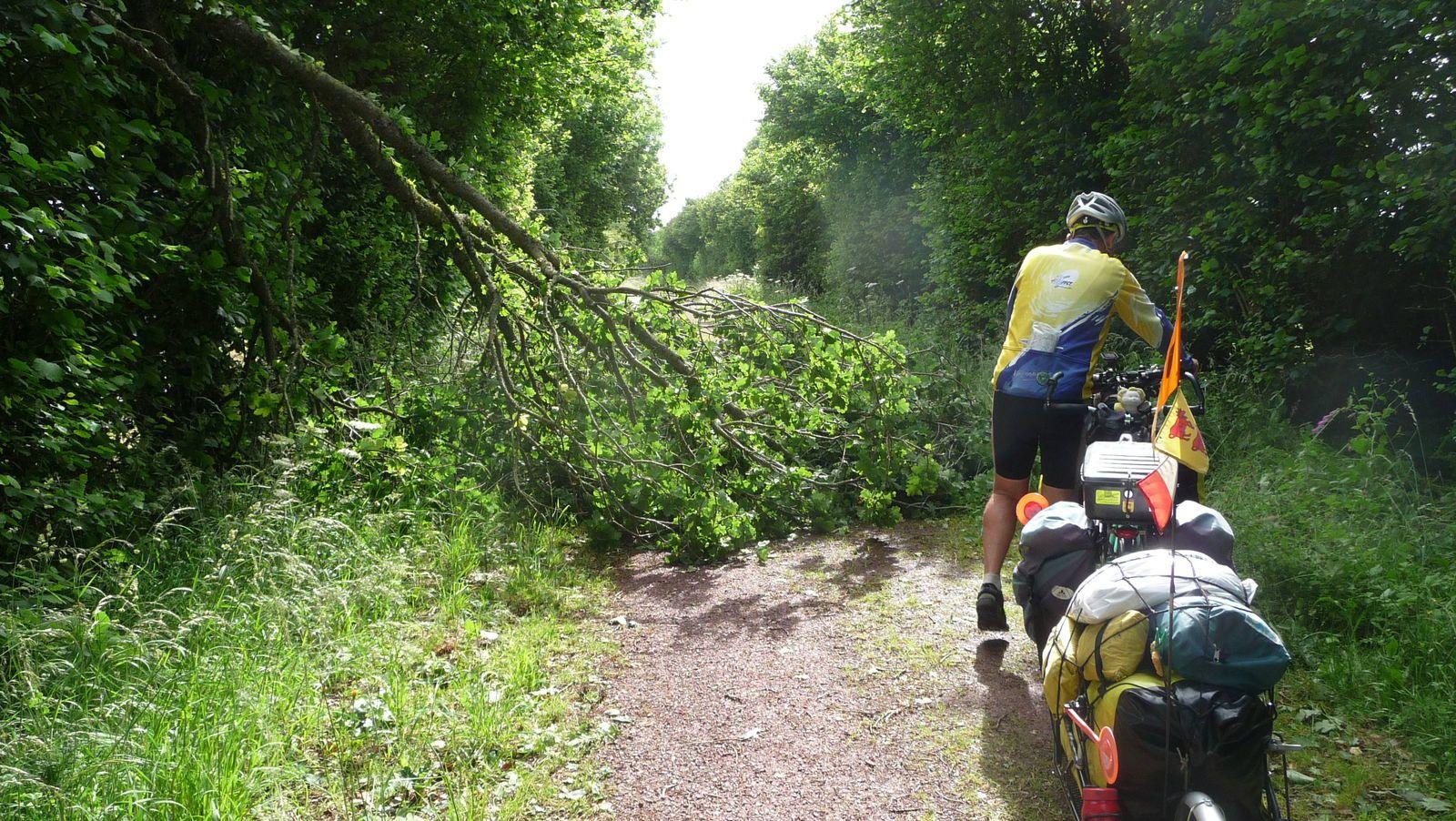 Après la tempête, la vélo-route n'a pas été dégagée, mais nous sommes passé quand même. Il a falut mettre plusieurs fois le pied parterre, pour des arbres couchés, ou des chicanes un peu serrées.,