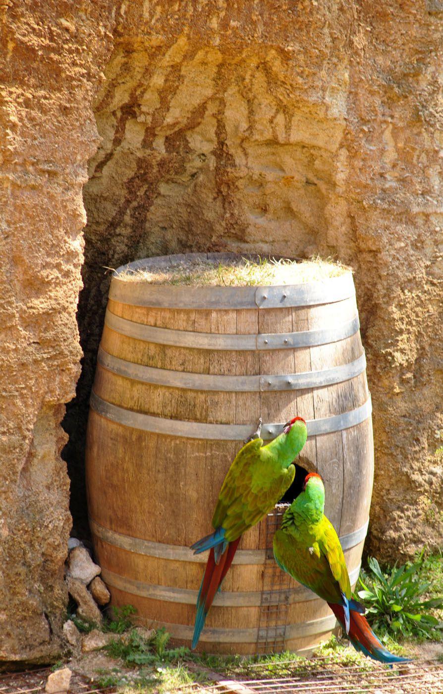 Oiseaux: Zoo de Doué la Fontaine. (photo prise le 6.05.2013)