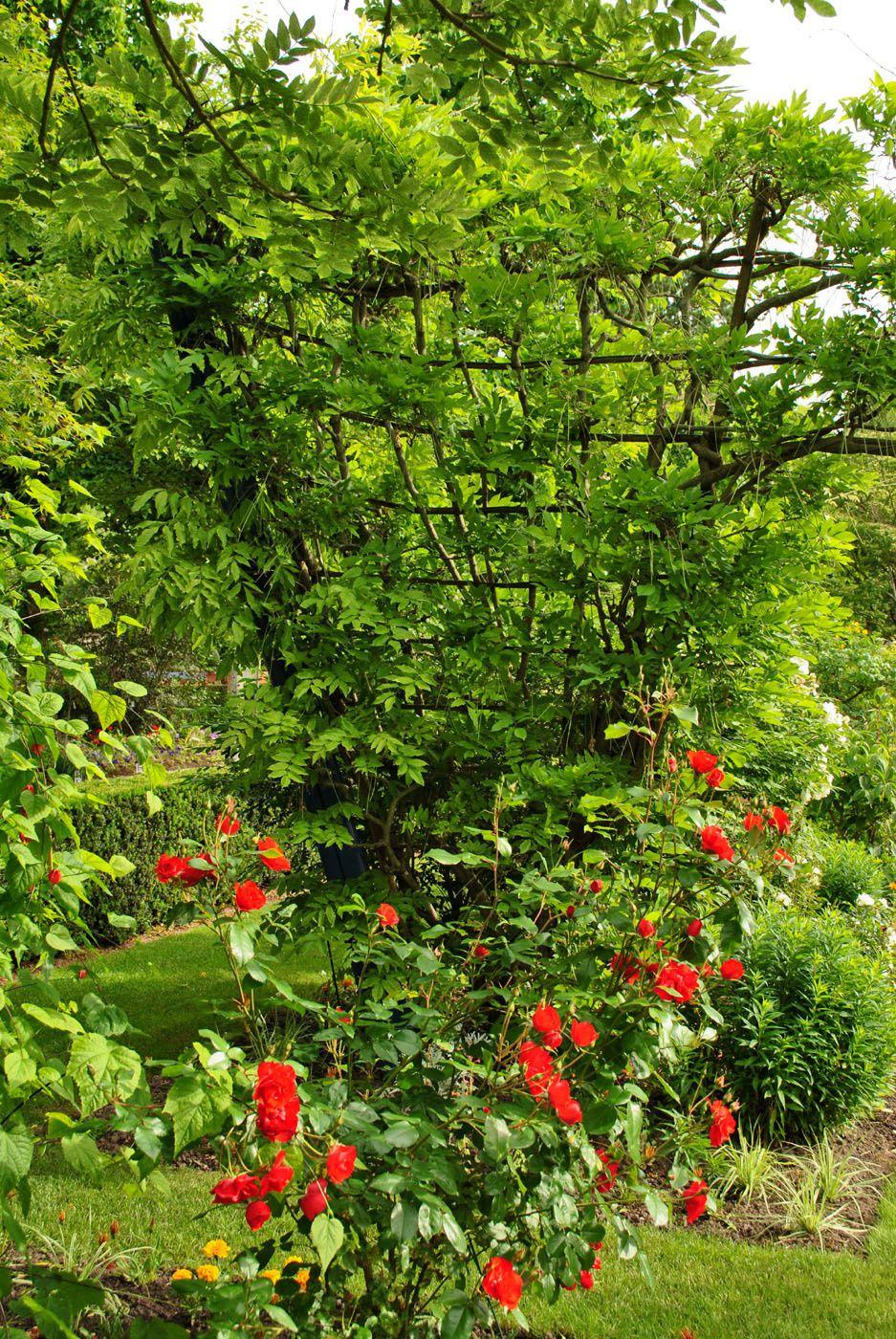Angers: Jardin de l'Arboretum. (photo prise le 15.06.2013)