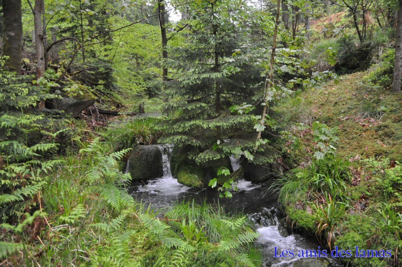 Ruisseau de saussenrupt et quelques pts cascades