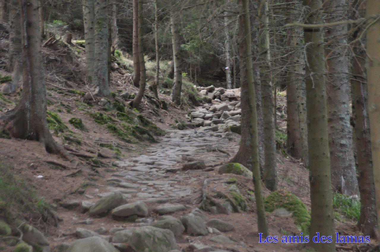 Notre sentier dans la montée de l'altenkraehkopf