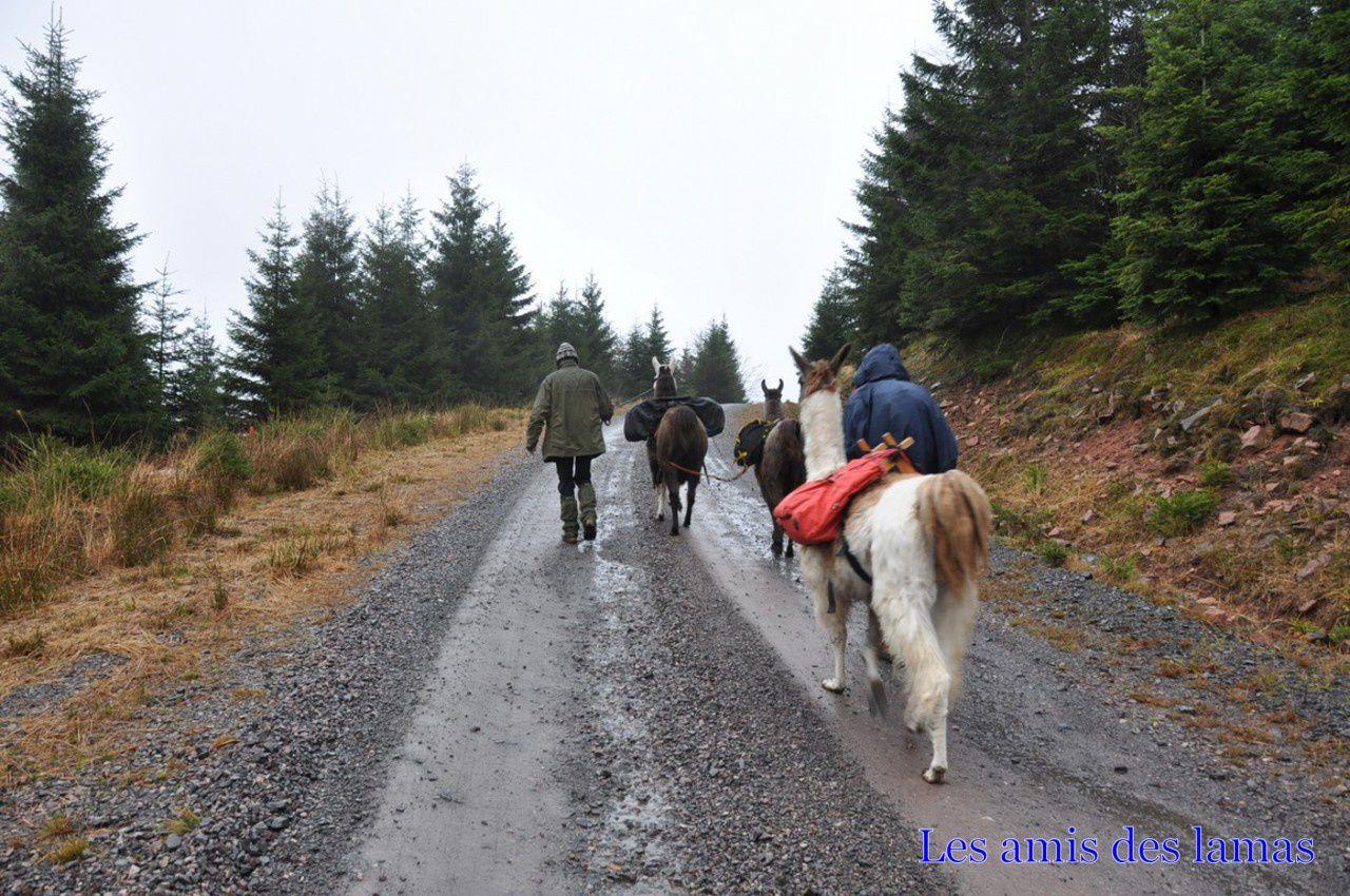 Malgré la pluie nous nous mettons à nouveau en route
