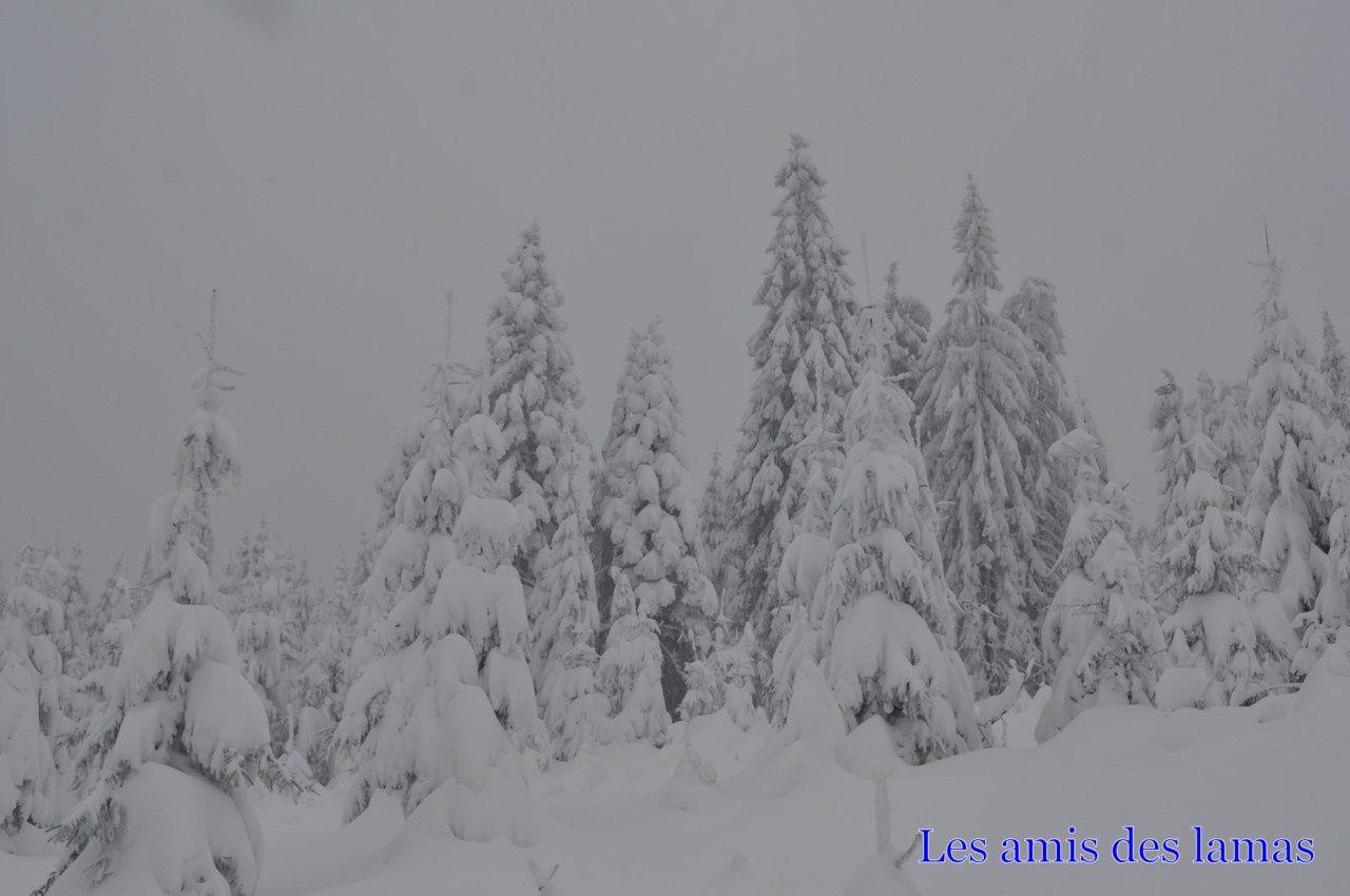 La neige est partout et recouvre tout