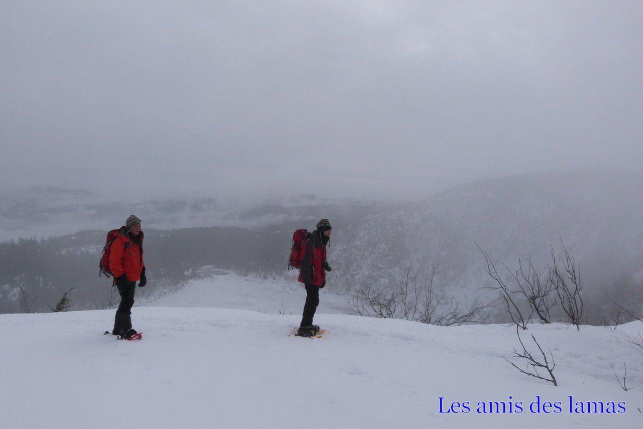 Une épaisse couche de neige recouvre le gazon du faing