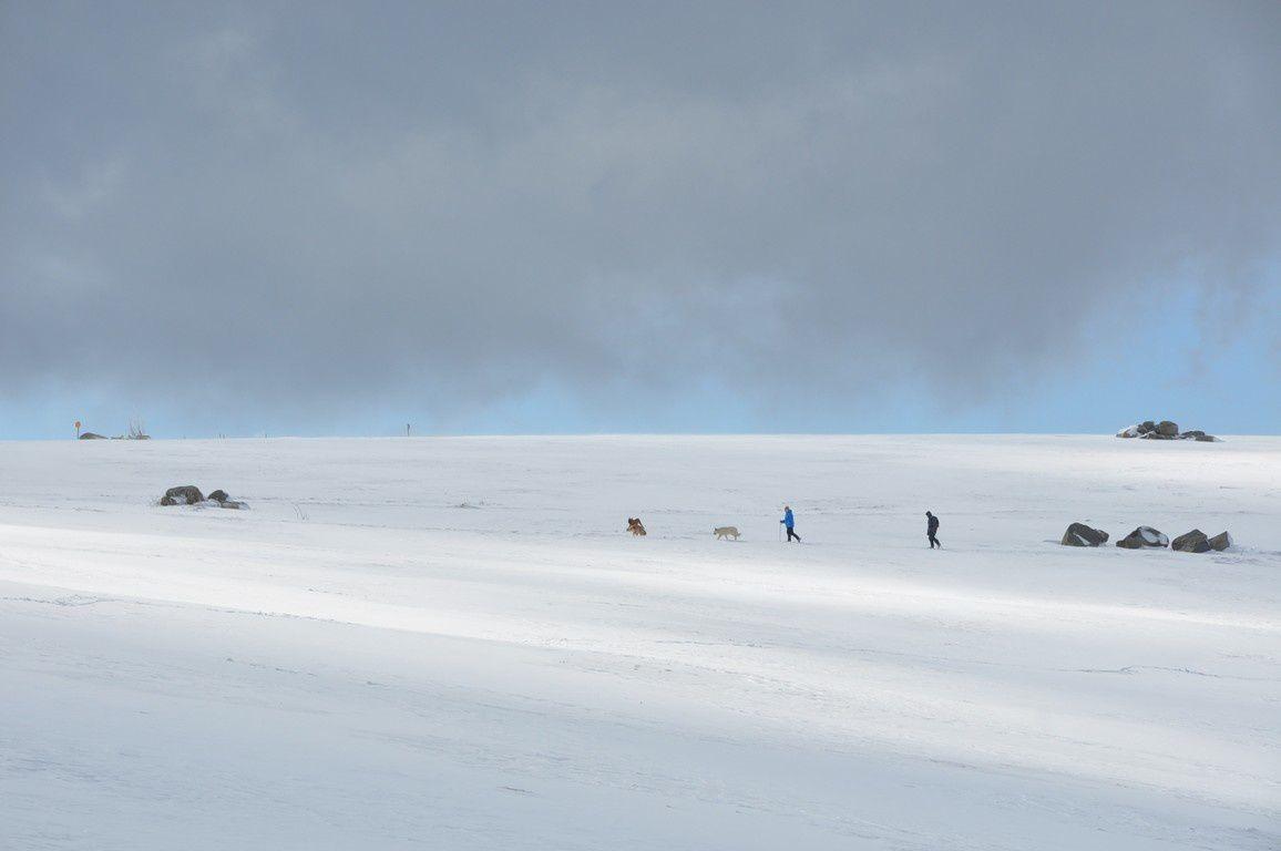 Sur les flancs du kastelberg, et les chiens donnant l'impression du grand nord