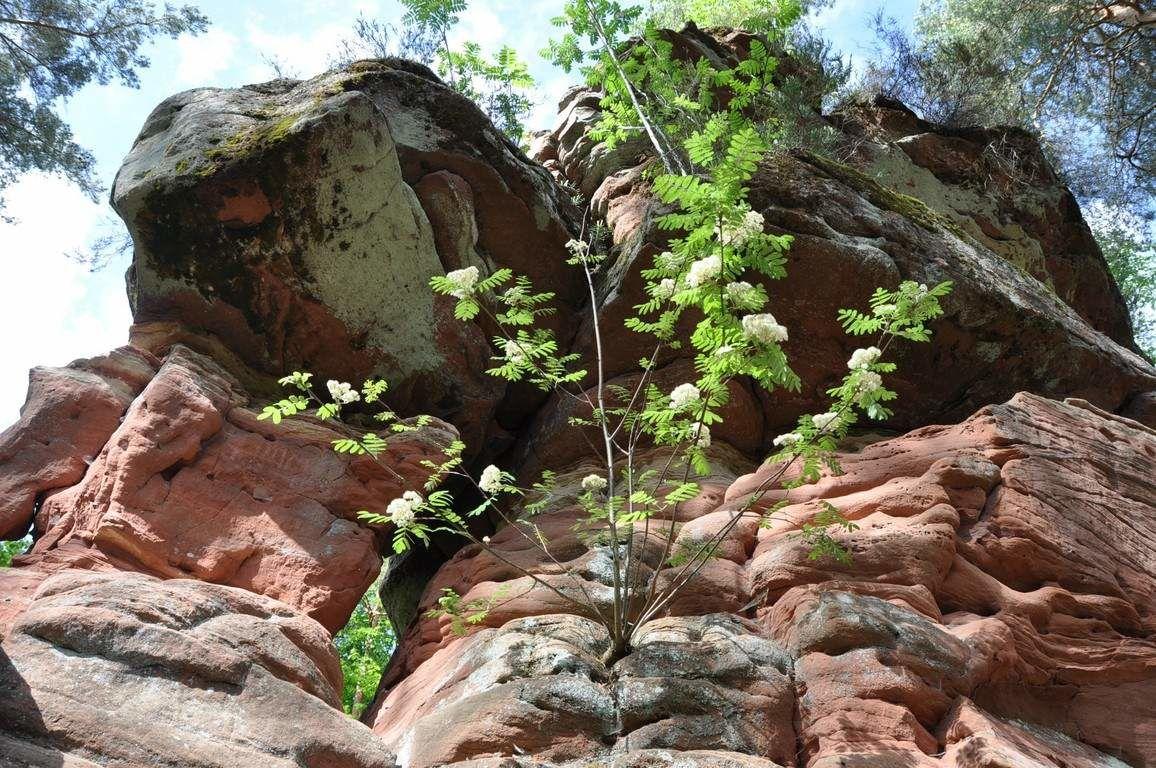 Au pied du rocher sur un pt promontoire