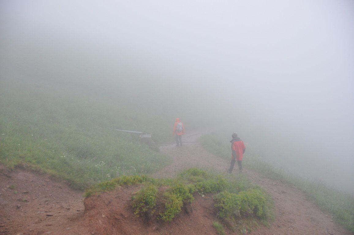 Le brouillard et les champs d'arnica sur les flans du hohneck