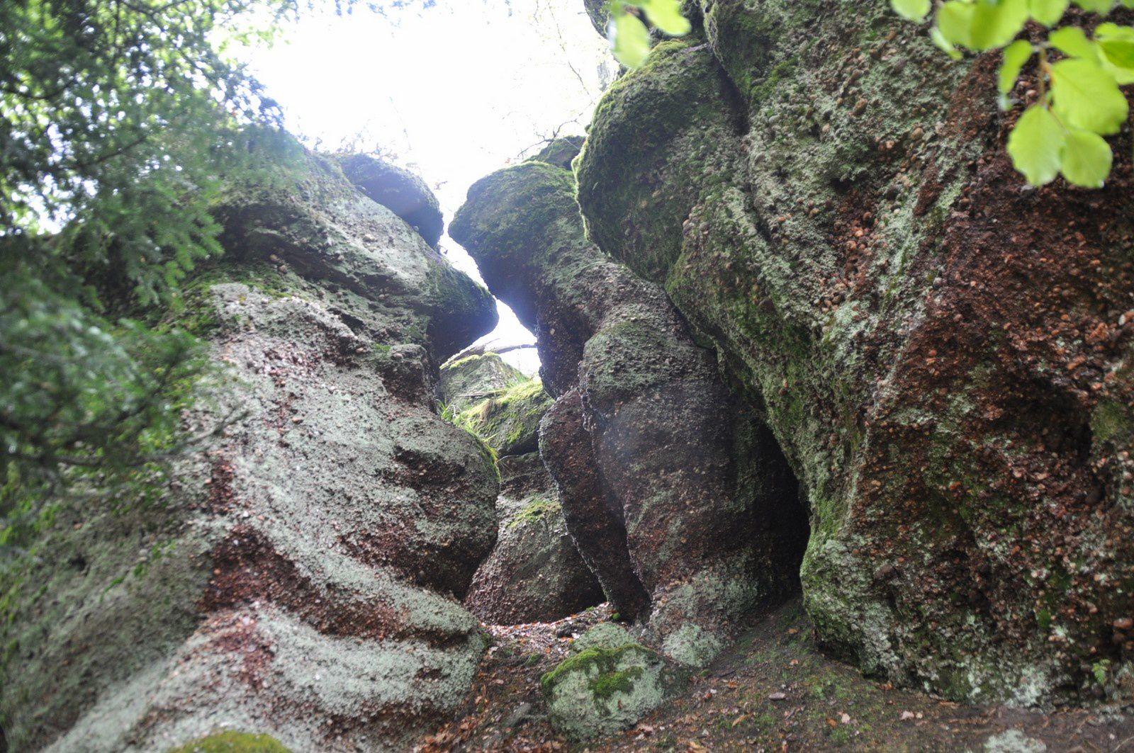 Curieuses roches à proximité de la Roche Lamproy et Jamour se régalant de quelques jeunes feuilles ...