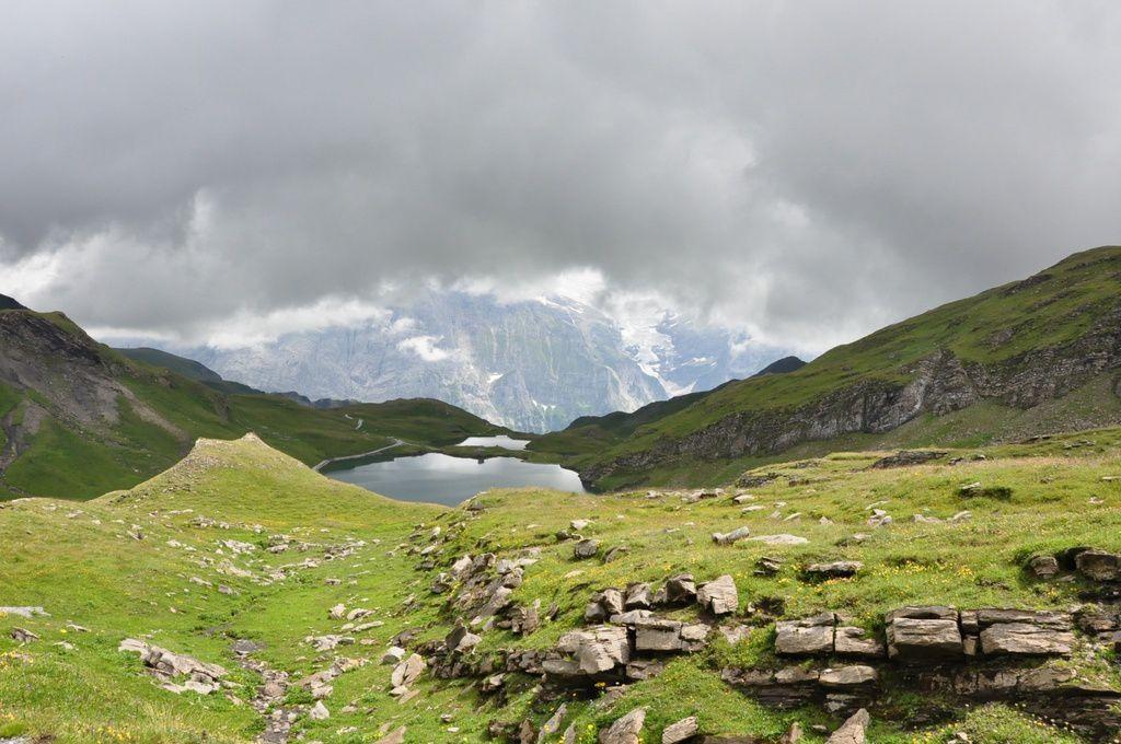 Dans le lointain , le lac de montagne de Bachsee ( 2271 m ), une belle gentiane pourpre en boutons, Et ..Gold,Gold ,Houra !...Non, il n'y a pas d'or , Hélas !