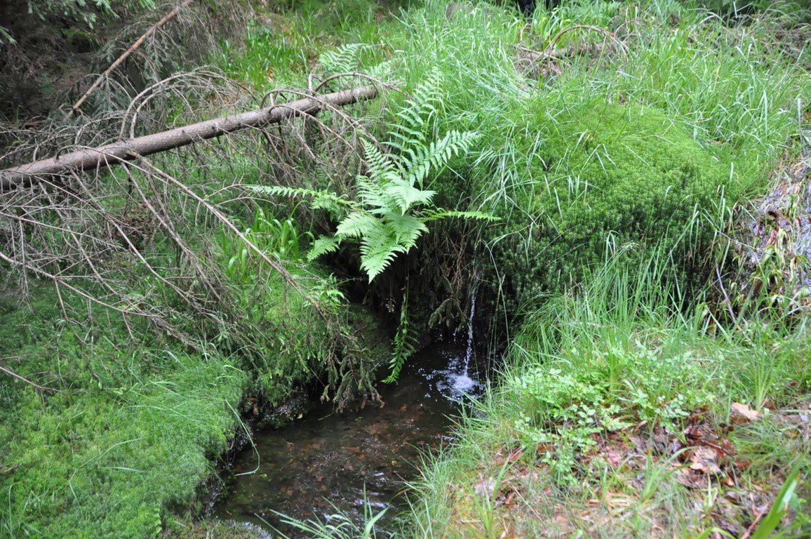 """La magnifique """"paire de fesses"""" en 2010.    Avec la chute de l'arbre ....et maintenant ,après la restauration de J.L ."""