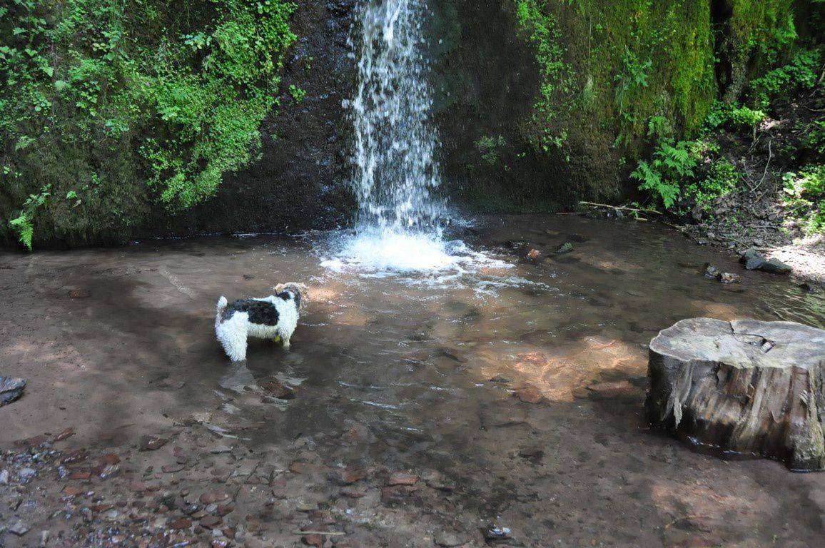 La cascade de Soultzbach et la baignade de Foxy....