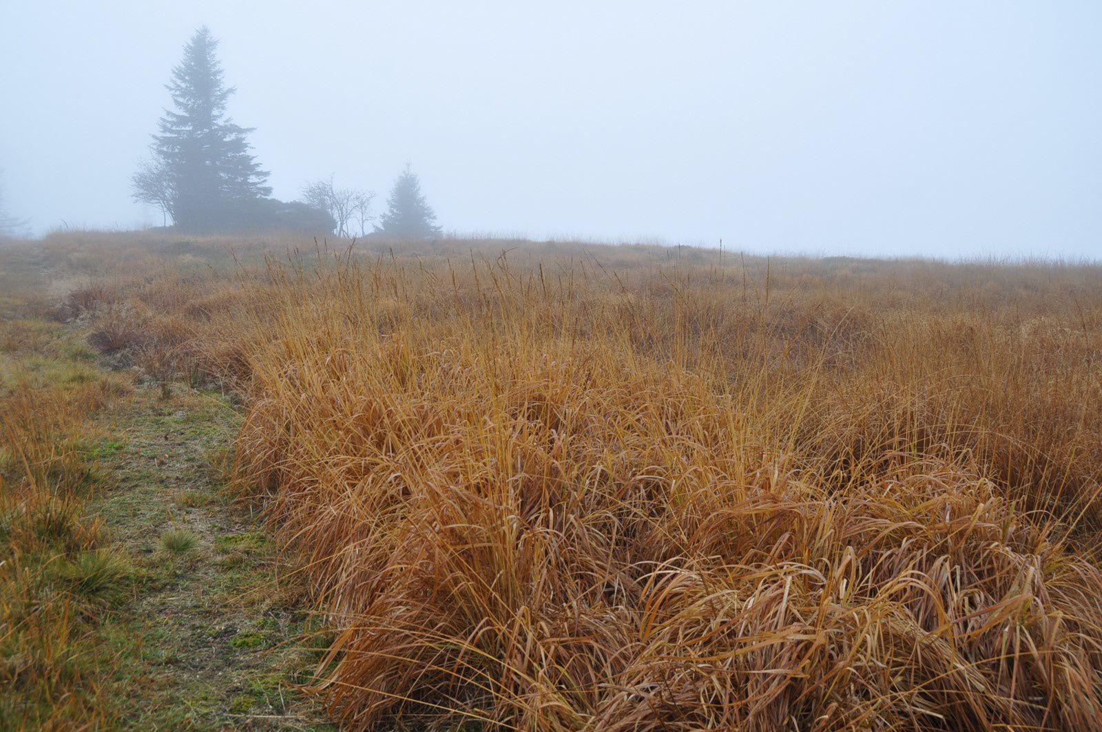 La chaume du Noll dans le brouillard .... Aucune chance, hélas, de bénéficier de sa superbe vue !