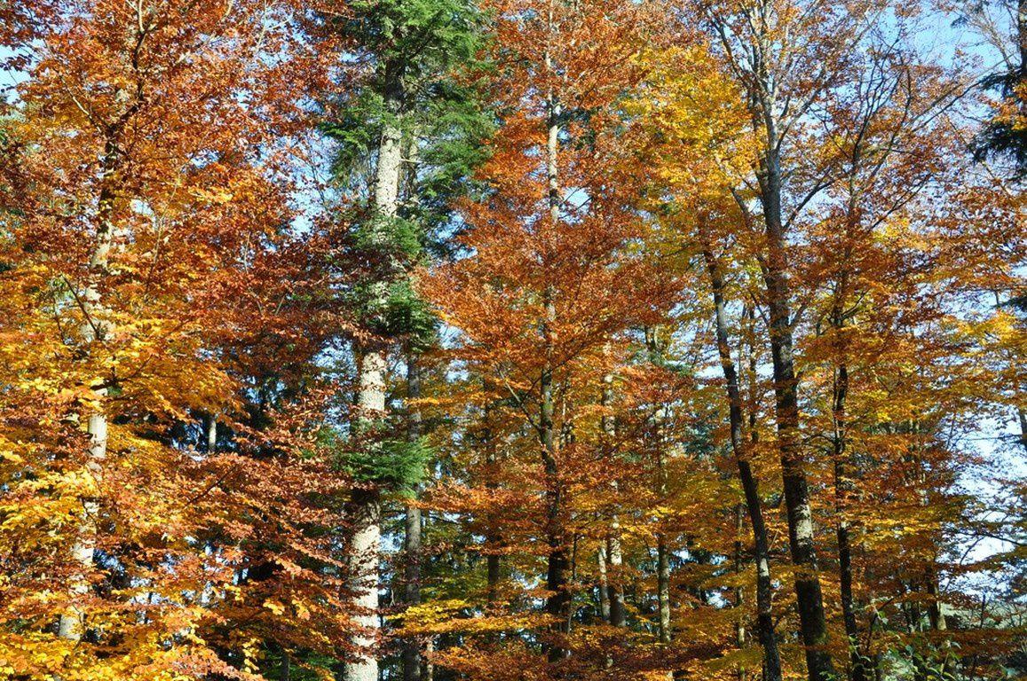 Féerie d'automne dans le Massif Vosgien